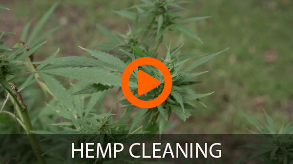 hemp cleaning
