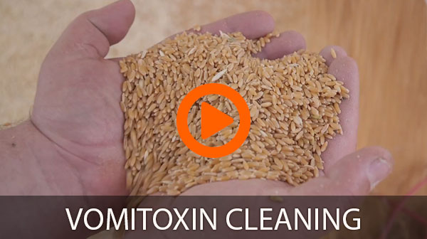 Vomitoxin Cleaning